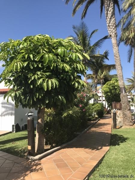 Sol Barbacan Gartenanlage